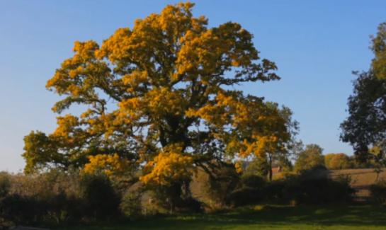 PJ Harvey The Glorious Land Oak Tree Autumn