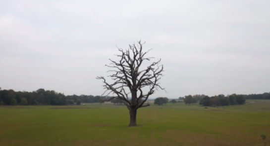 PJ Harvey The Glorious Land Oak Tree Winter