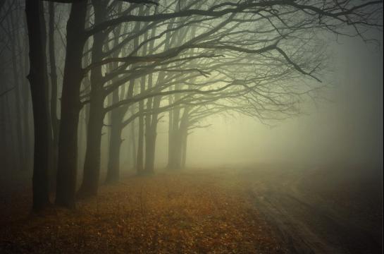 Alexander Kitsenko Mystik Forest