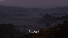 Origins of Us Episode One Bones