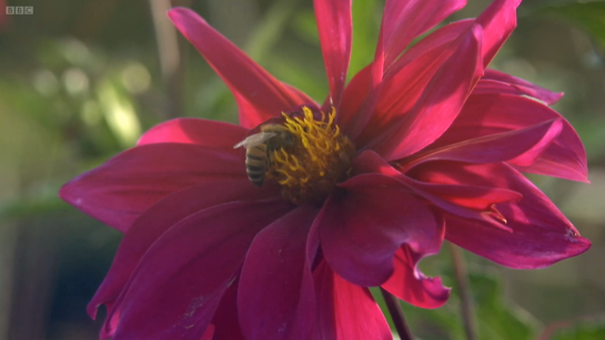 Bees, Butterflies and Blooms