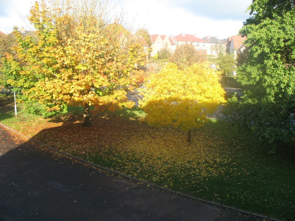 Autumn from my kitchen window - Bathgate, West Lothian, Scotland